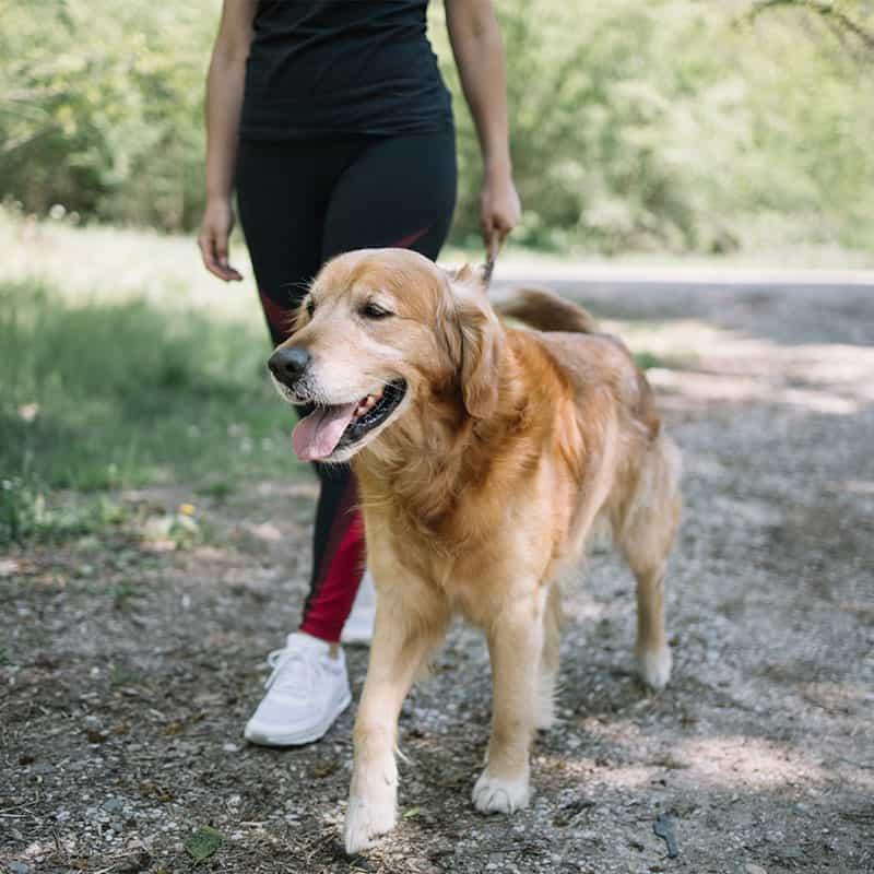 Dog Walking Fairfax